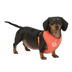 dotty harness II para-ha1529-orange4