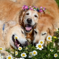 flower retriever