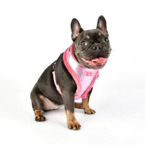 evon harness A pink on dog